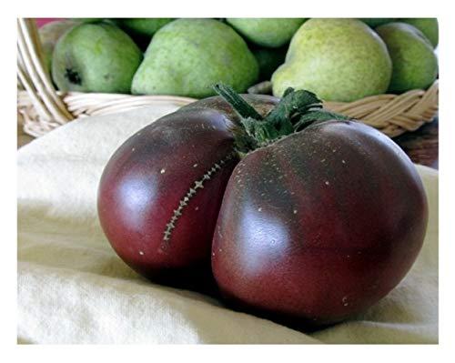 """Premier Seeds Direct ORG214 Tomaten """"Brandywine Schwarze Organik"""" Samen (Packung mit 60)"""