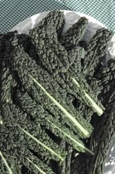 legumes-kings-seeds-flux-des-paquets-premier-nero-di-toscana