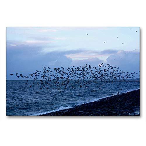 CALVENDO Lienzo de 90 cm x 60 cm Horizontal, diseño de pájaros en Butjadingen, impresión sobre Lienzo, Lienzo: por la Noche en el Estanque Tossenser Natural