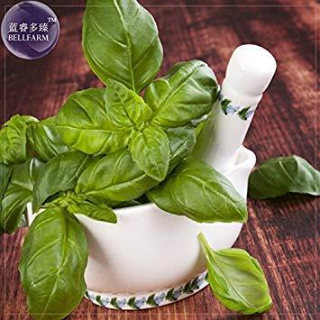 Pinkdose® 2018 Heißer Verkauf Davitu Genovese Basilikum Samen, 20 Samen, Die Superior Basilikum für Die Herstellung Der schmackhaftesten Pesto in Der Welt E4233 -