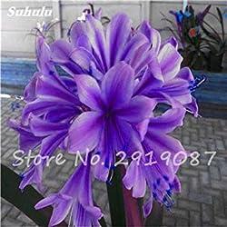 Vista 100 stücke clivia samen günstige clivia Blumen Mix Farben Bonsai Balkon Blume für hausgarten Kinder so schöne 23