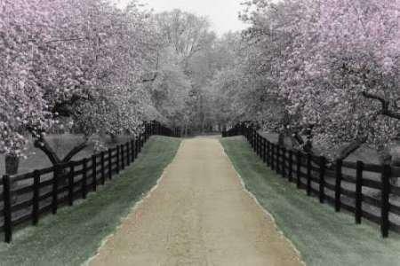 Feeling at Home Feelingathome.it-LEINWANDDRUCK-Apple-Blossom-Lane-cm78x118-poster-bild-auf-leinwand (Blossom Lane)