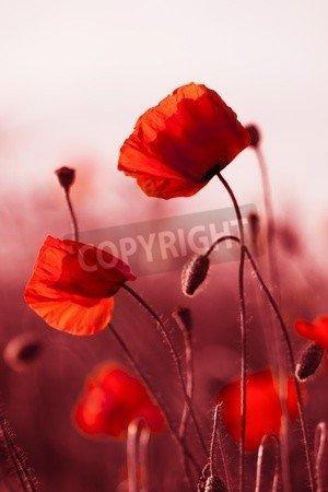 Leinwandbild Flowers Wandbilder