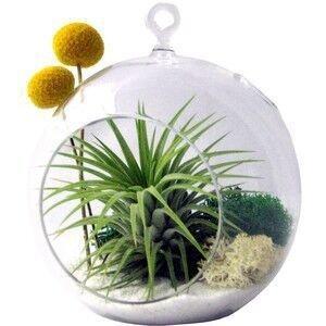 Cupcinu Hängepflanze Glas Terrarium Teelichthalter Blume Vase Kugel Air Blumentopf Container Succulents Kaktus Moos Miniatur Garten für Home Garten Decor, Borosilikatglas, Big, S