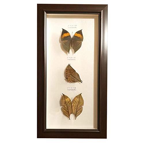 XIEJI Echte Schmetterlingsprobe gerahmt Biologische Unterrichtsmaterialien, Heimtextilien