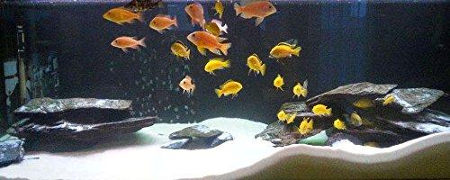 Aquarium Rock Fish Tank Decoration Slate 100% Natural Ideal For Caves BLACK SLATE 10kg Set 5