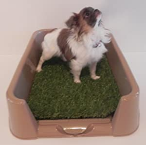 Dog Litter Box Little Squirt By The Rascal Dog Litter Box Company. As Seen On Dragon's Den .......