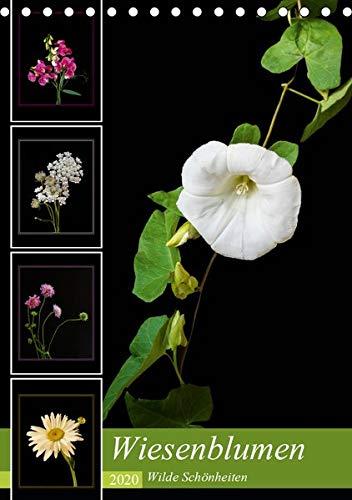 Wiesenblumen - Wilde Schönheiten (Tischkalender 2020 DIN A5 hoch): Leuchtende Wiesenblumen vor schwarzem Hintergrund (Monatskalender, 14 Seiten ) (CALVENDO Natur)