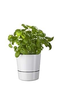 Rosti Mepal Grand pot hydro pour plantes aromatiques irrigation par capillarité Diamètre 13cm Blanc