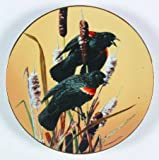 Portrait of Exquisite Birds Reihe DIE rotschulterstärling von Carl Brenders 6. Teller