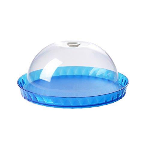 Plat à tarte 36 cm avec cloche Turquoise
