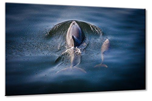 Bild auf Leinwand Delfine Größe: 60cm x 90cm | Delfin Delfine Meer Wasser Blau Delfinbaby Wal Weich Blau Tiere | Aus der Serie: Tiere der Meere | Farbe: blau | Rubrik: tiere + natur