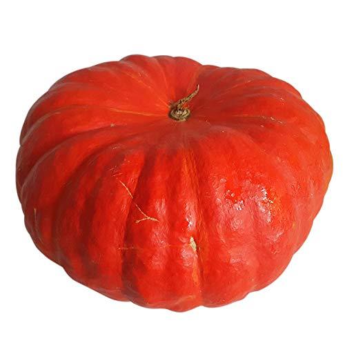 1 Roter Zentner - großer Ess- und Speisekürbis - Etampes - Schnitzkürbis und Zierkürbis - Deko bei Halloween