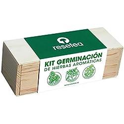 Kit Germinación de hierbas aromáticas (albahaca, cilantro y perejil rizado) de Resetea