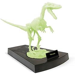 Geoworld Jurassic Night 23210773 Velociraptor - Esqueleto de dinosaurio (brilla en la oscuridad, 27 cm) [importado de Alemania]