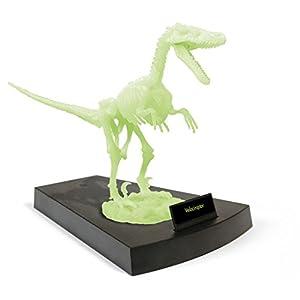 Geoworld Jurassic Night 23210773 Velociraptor - Esqueleto de dinosaurio (brilla en la oscuridad, 27 cm) importado de Alemania