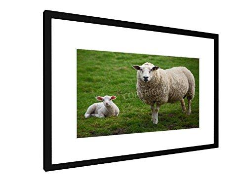 Ein Schaf und ein Lamm - 60x40 cm - Bild mit Rahmen / Gerahmtes Poster - Kunstdruck - Wandbild - Kunst, Gemälde, Foto, Bild - Tiere (Landwirtschaft Gerahmte Kunst)