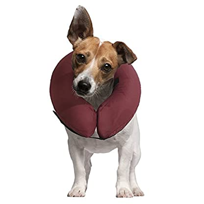 iCollr – The Inflatable Pet Collar for Cats and Dogs in Post Surgery Recovery - MEDIUM + 1