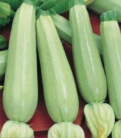 """Premier Seeds Direct COU02 feinste italienische ZucchiniSamen """"Bianca Di Trieste"""" (Packung mit 25)"""