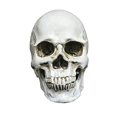 Crâne humain oULII crâne résine pour la decorazioen Halloween Figurine