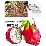 GEOPONICS ale caliente! El embalaje original, en 40 / Paquete de semillas, semillas de Pitaya - Blanco Pitaya - fruta jugosa, la semilla se encuentran en C - Rare - Arci Nueva