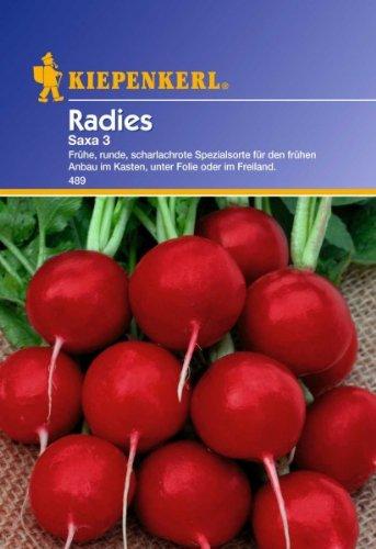 Radies 'Saxa 3',1 Portion