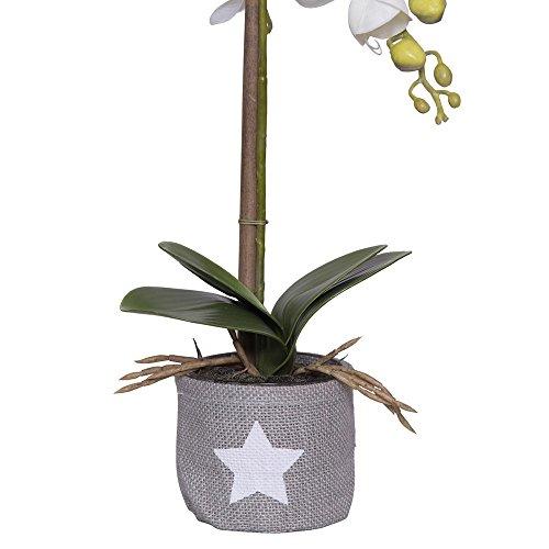 VIDEX Jute Planteur étoile soutient et Coquillages Nonwoven