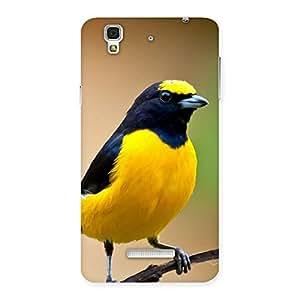 Premium Sweet Bird Back Case Cover for Yu Yureka