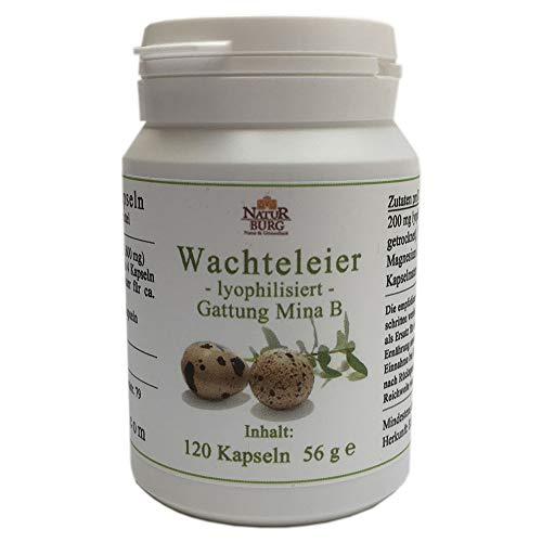 Lyophilisierte Wachteleier Kapseln 1er Pack (1 x 120 Kapseln) Nahrungsergänzungsmittel - ❣ Wachteleier der B-MINA Gattung - Allergie Immunsystem Aminosäuren Proteine Mineralien Vitamine
