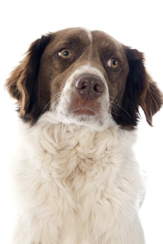 The French Spaniel Dog Journal: 150 page lined notebook/diary