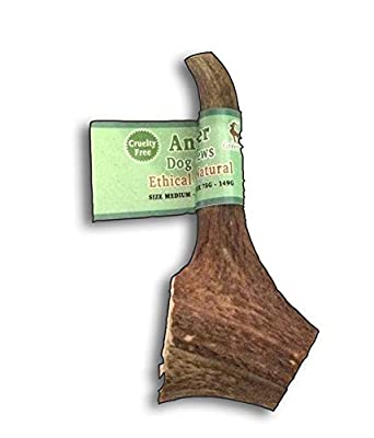 Green Stag Antler Dog Chew Extra Large Natural - Ethical - Dog Charity from Green Stag