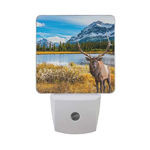 DFISKK Nachtlicht Set of 2 Red Deer Bull Elk Moose Autumn Woodland Forest Water Snow Mountain Blue Sky Auto Sensor LED Dusk to Dawn Night Light Plug in Indoor for Adults -