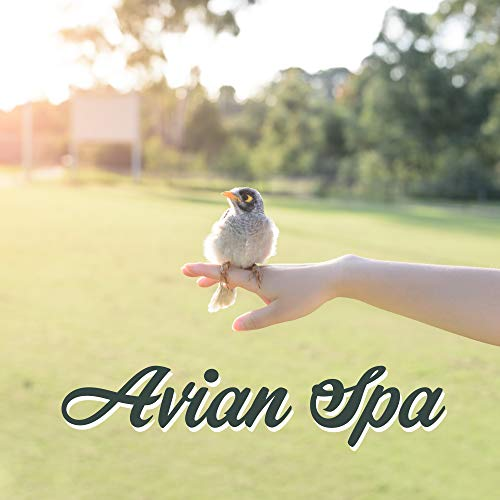 Avian Spa - Music with Joyful Bird Singing & Nature Sounds in the Background for Spa, Massage, Wellness and Bathing -