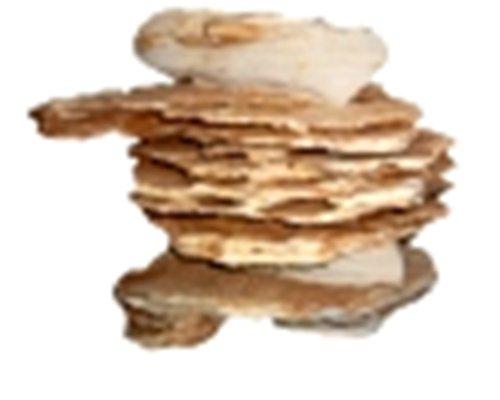 ca. 1 kg Grain Stein, Dekostein für Aquarien und Terrarien