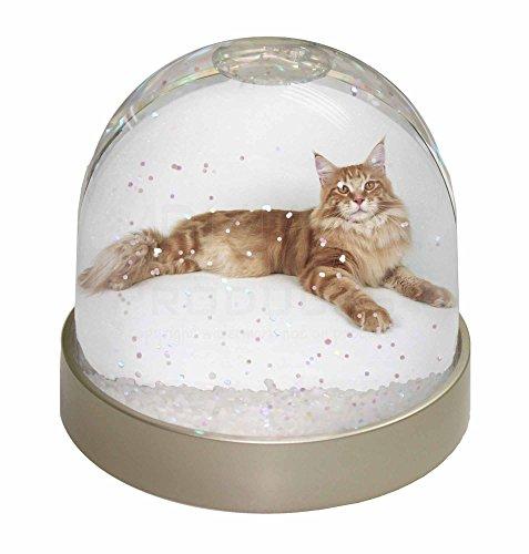 Advanta rot Schneekugel Maine Coon Katze Snow Dome Geschenk, mehrfarbig, 9,2x 9,2x 8cm