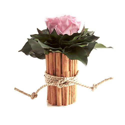 ROSEMARIE SCHULZ® Heidelberg Blumengesteck mit Zimtbecher und 1 Rose unvergänglich Haltbar 3 Jahre Rosengesteck/Blumengesteck/Shabby/Blumendeko (Rosa)