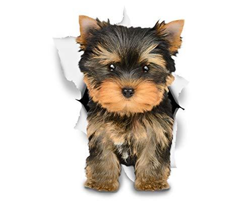 Winston & Bear 3D Hund Aufkleber - 2er-Pack - bezaubernde Yorkie für Wand, Kühlschrank Husky Aufkleber
