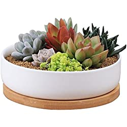 Pot en céramique pour plantes grasses, de Y&M™ - 15,2cm - Blanc Round