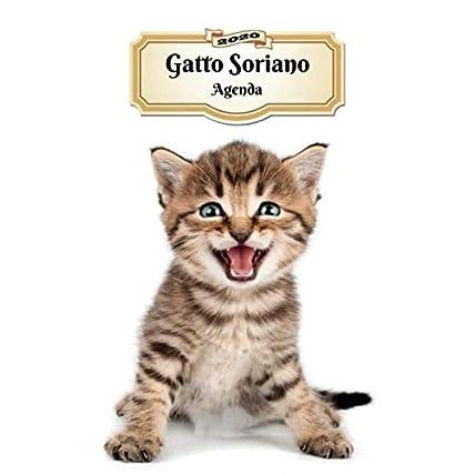 2020 Gatto Soriano Agenda: 107 Pagine   Dimensioni DIN A5   Pianificatore Settimanale   12 Mesi   Due Pagine Per Settimana   Calendario   Diario   Gatto