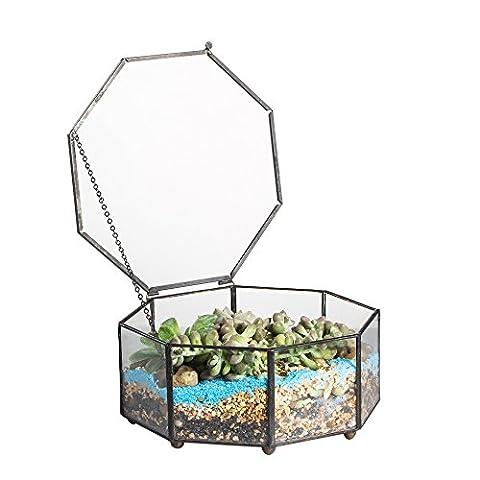 Artistique moderne en verre transparent fermeture eight-side Prism géométrique Plante pour terrarium Jardinière Succulente Fougère Reptile avec couvercle basculant Mousse 15cm x 15cm x 7,5x m plat idéal pour mousse et insectes rasising