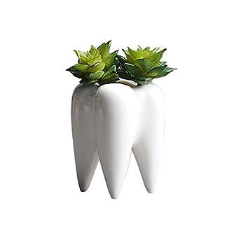Forme des dents Blanc en céramique Pot de fleurs moderne Design innovant Succulente Mini plantes Pot de fleurs sans plantes pour balcon Jardin Décor, facile à déplacer (sans plantes)