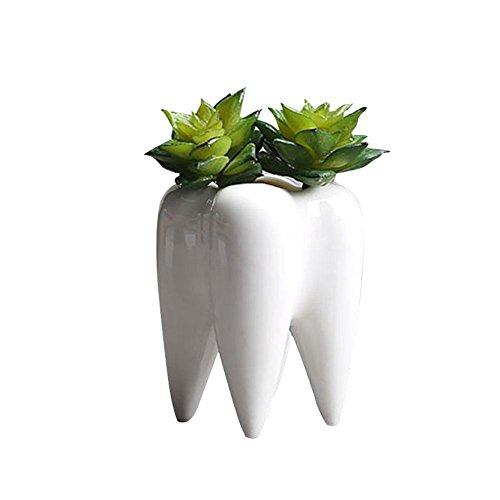 Maceta de cerámica blanca con forma de diente con diseño innovador y moderno, mini macetas con...