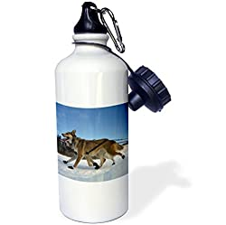 3dRose wb_13862_1 Yukon Quest Sled Dogs on The Takhini River Sports Water Bottle, 21 oz, White