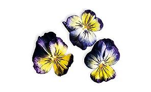 Capsule Viola Giallo Blu Plantui - Confezione da 3 pezzi