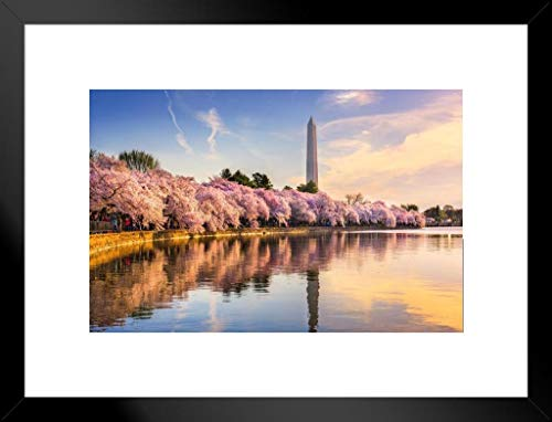 Poster Foundry Washington, DC Cherry Blossoms Monument Mall Spring Photo 26x20 inches Matted Framed Poster