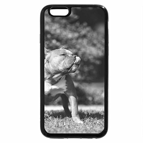 iPhone 6S Case, iPhone 6 Case (Black & White) - tank! (White Tank Dog)