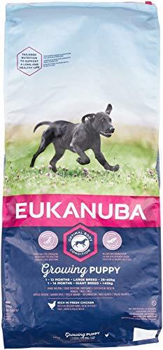 Eukanuba Puppy/Junior Large Breed 12 kg
