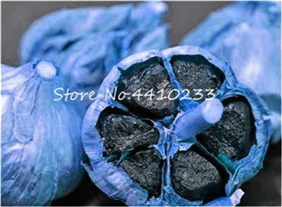 Bloom Green Co. 60 Pcs Black Garlic Bonsai Pure Natural Organic Healthy Delicious Pungent Spice Vegetable Bonsai Kitchen Seasoning Food Seedplan: 8