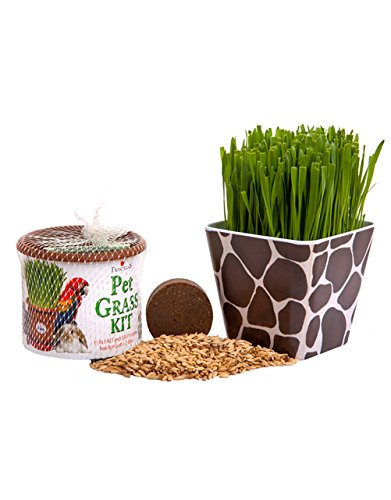 Priscilla's Pet Kitty Cat Grass Giraffe Combo Kit Planter Container