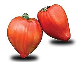 Variété vigoureuse produisant de très gros fruits (200-300 grammes et plus) rouges et charnus en forme de coeur. Saveur douce, parfum intense, goût incomparable.